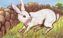 Mito del conejo astuto y cruel