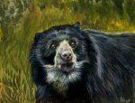 Mito del oso Ucumari, el guardián del bosque